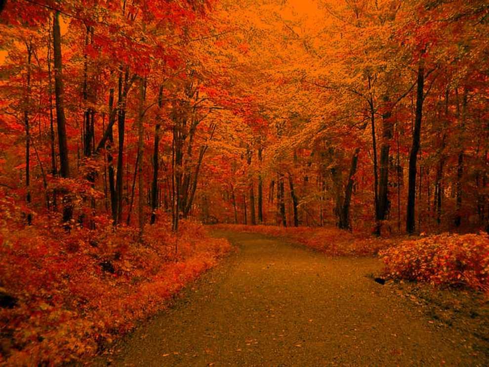 autumn_road