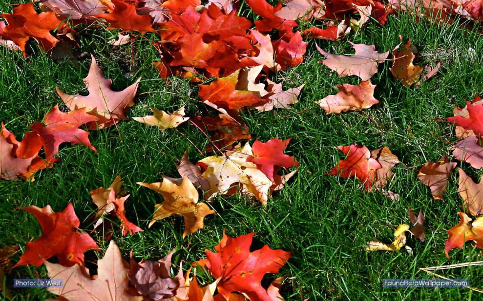 fallen-leaves-ccby-LizWest