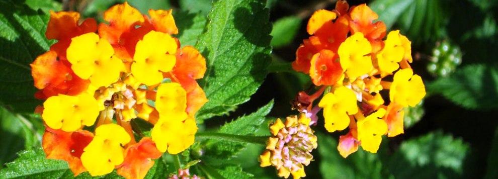 photo-orange-flowers