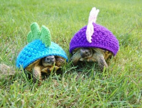 turtle-coats